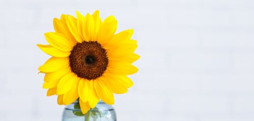 single sunflower in clear vase with water